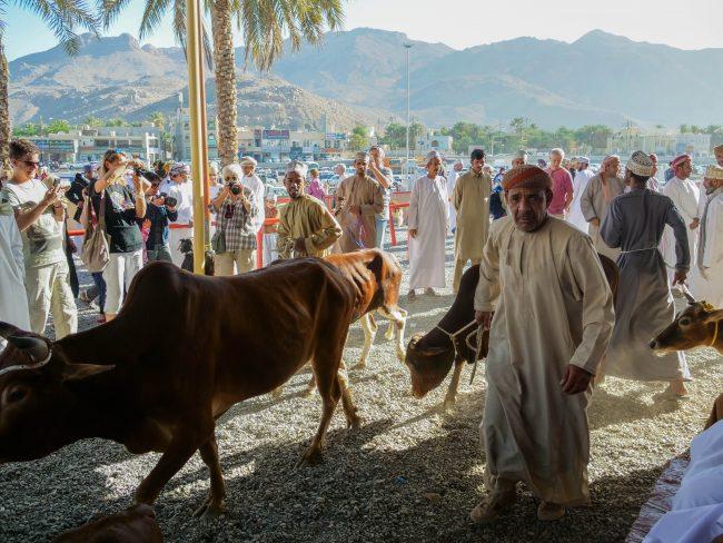 Nizwa market cow for sale