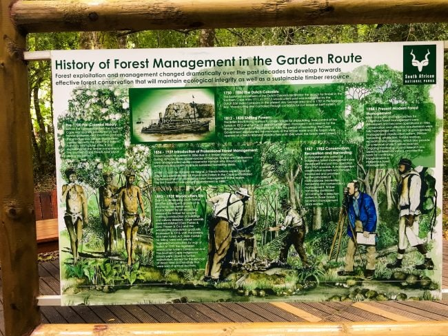 Forest management on the Garden Route