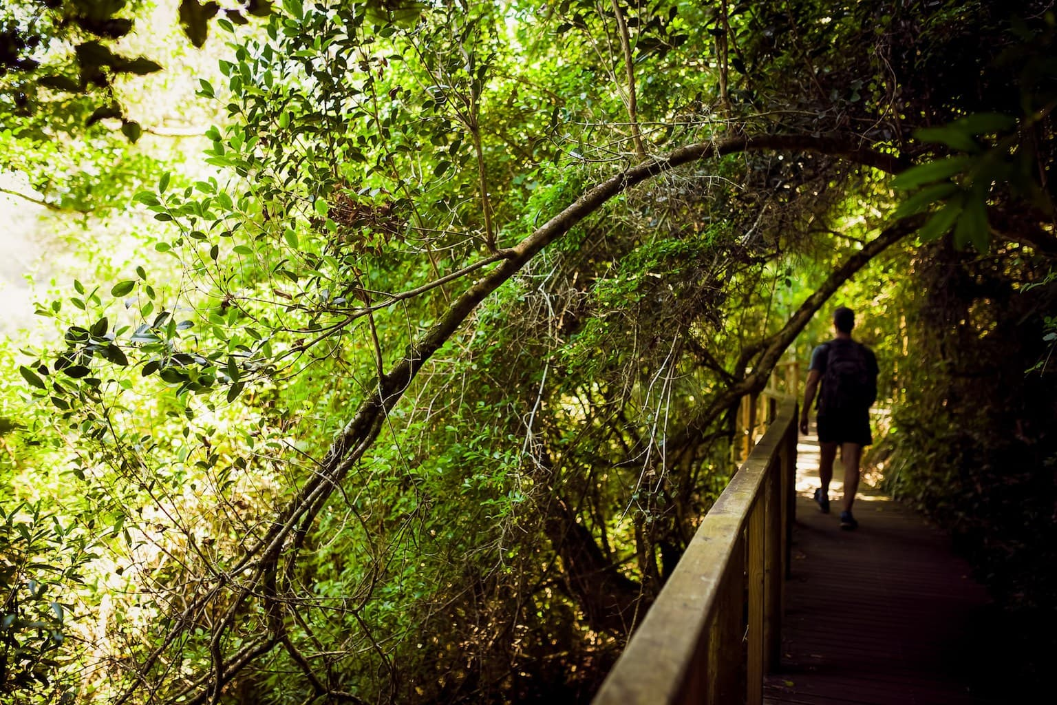 The wooded walking path to the waterfalls on the Kingfisher Trail