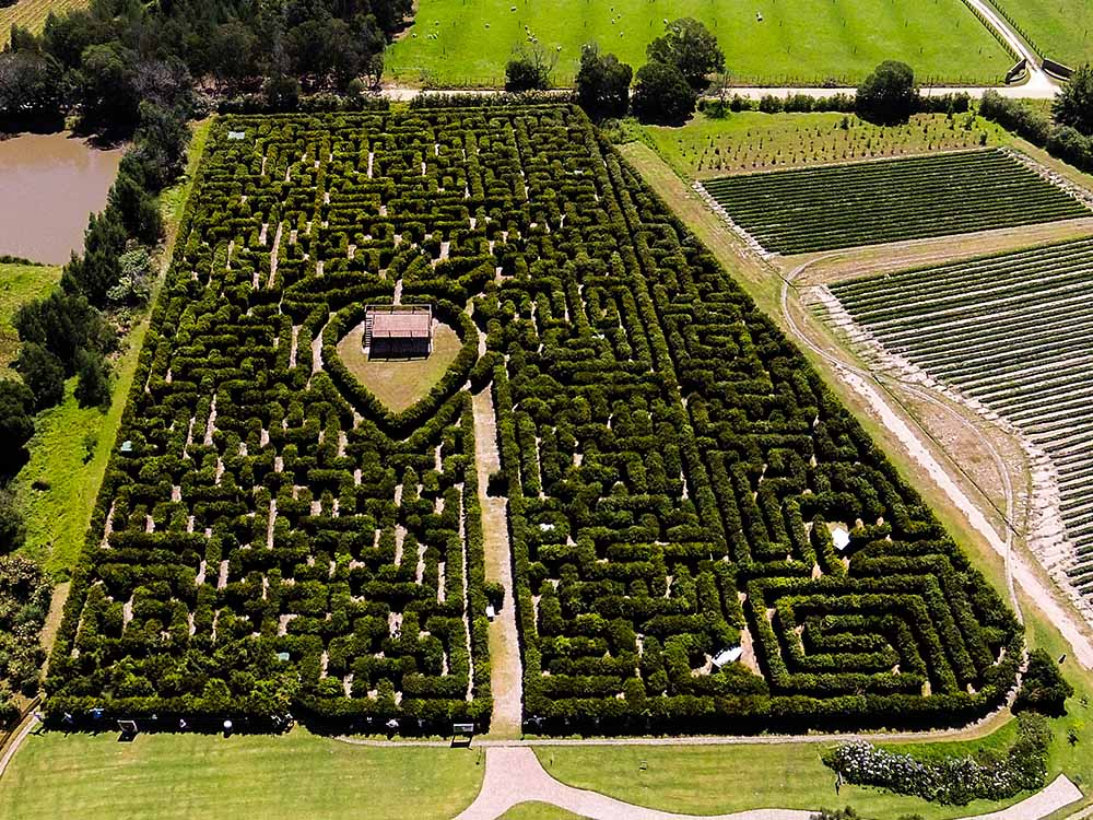 Red Berry Farm Largest Maze in the Southern Hemisphere