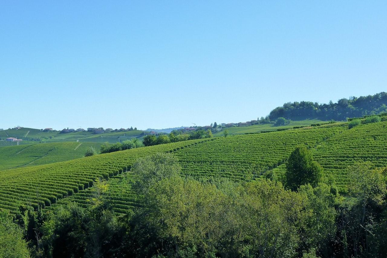 Barolo vineyards