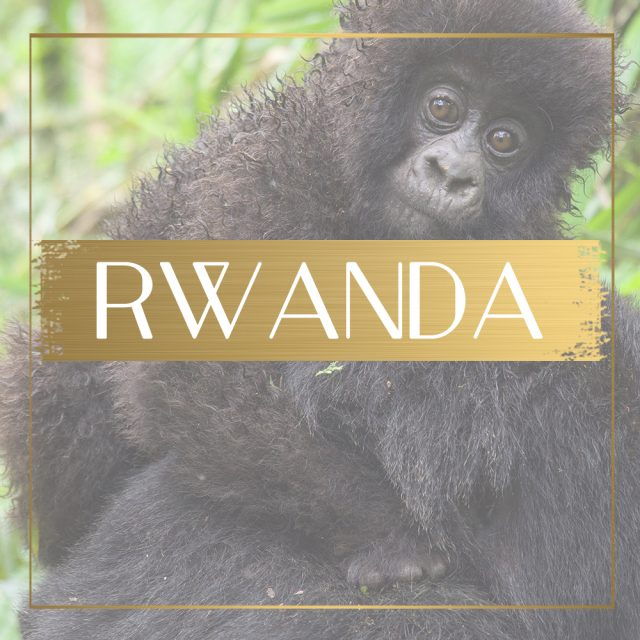 Destination Rwanda feature
