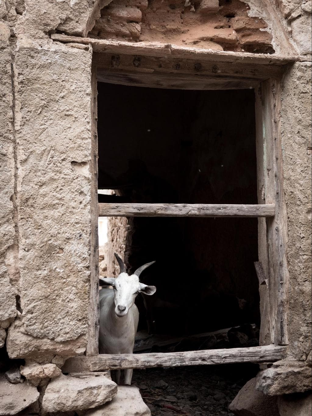 Funny goats in ruined buildings of Berbera