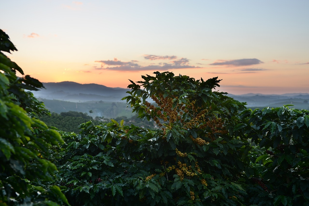 A day trip to a coffee cooperative