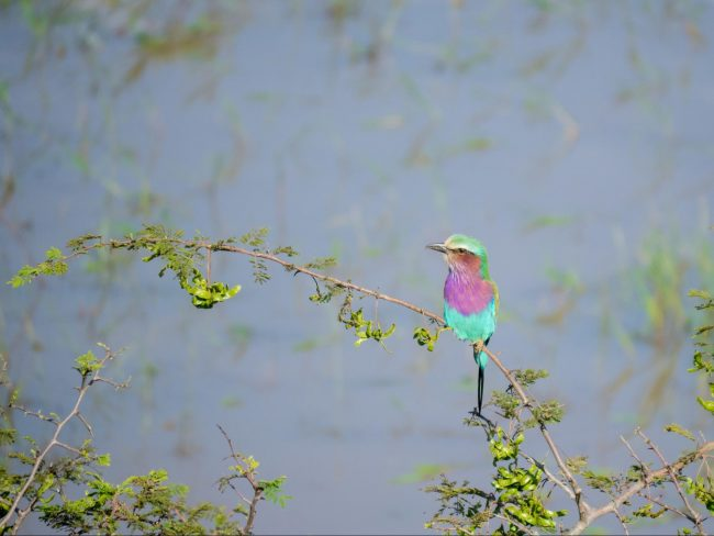 Birding at Akagera National Park