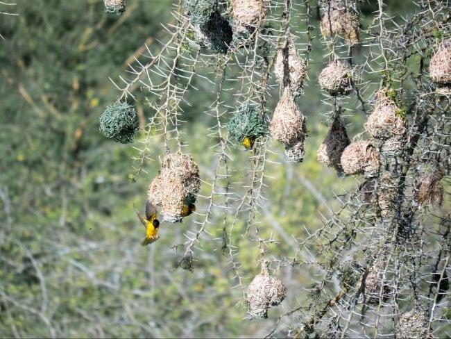 Birding opportunities in Akagera National Park