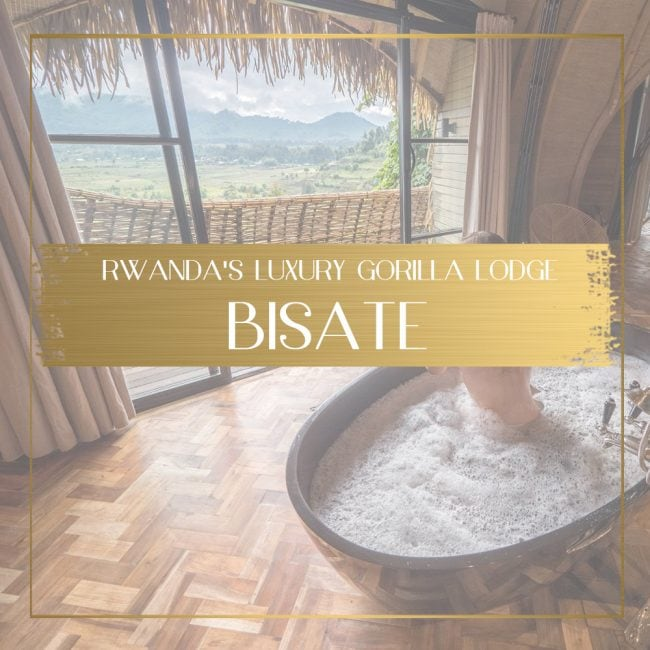 Bisate Lodge feature