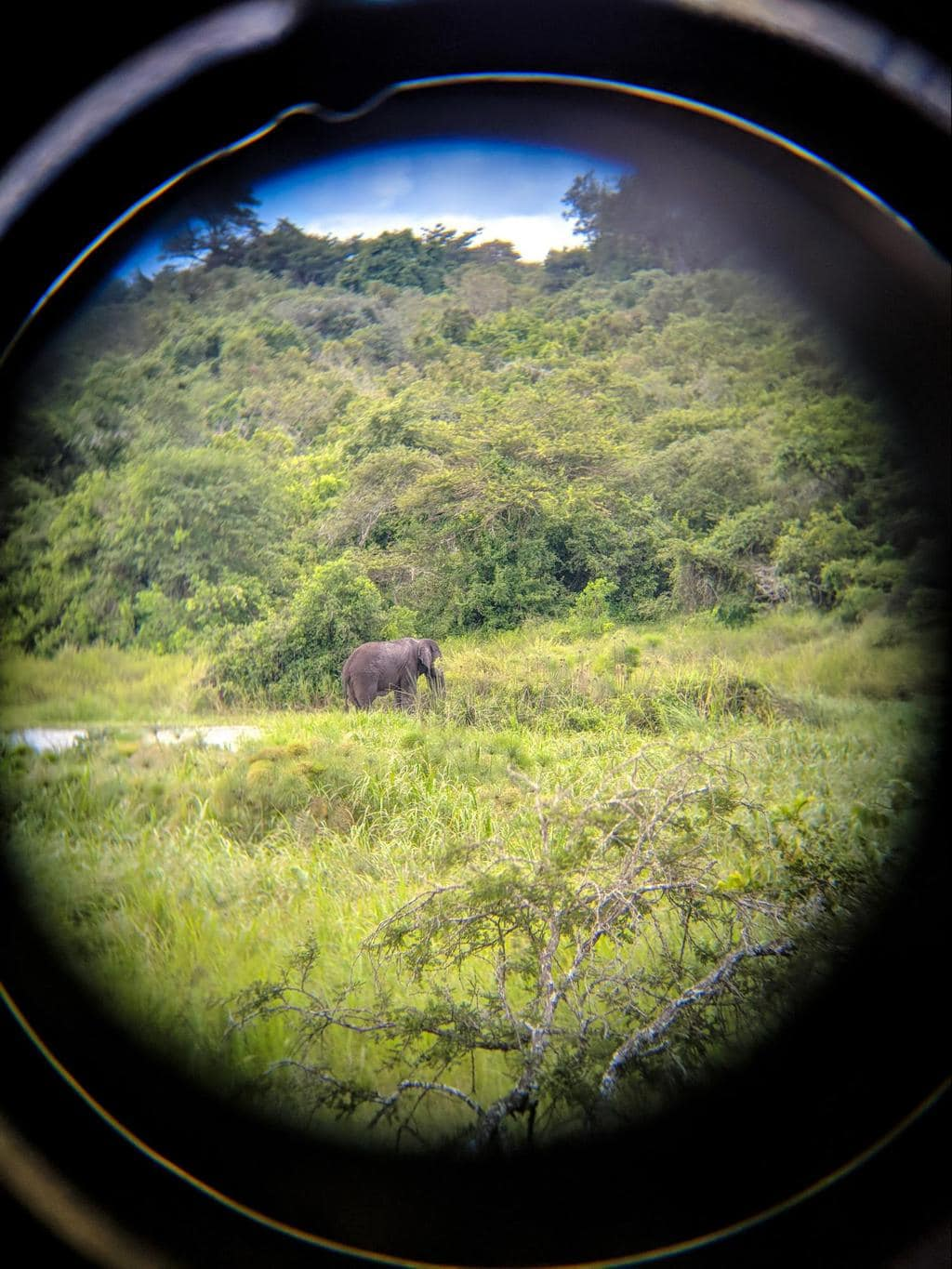Hard to spot elephants through a binocular