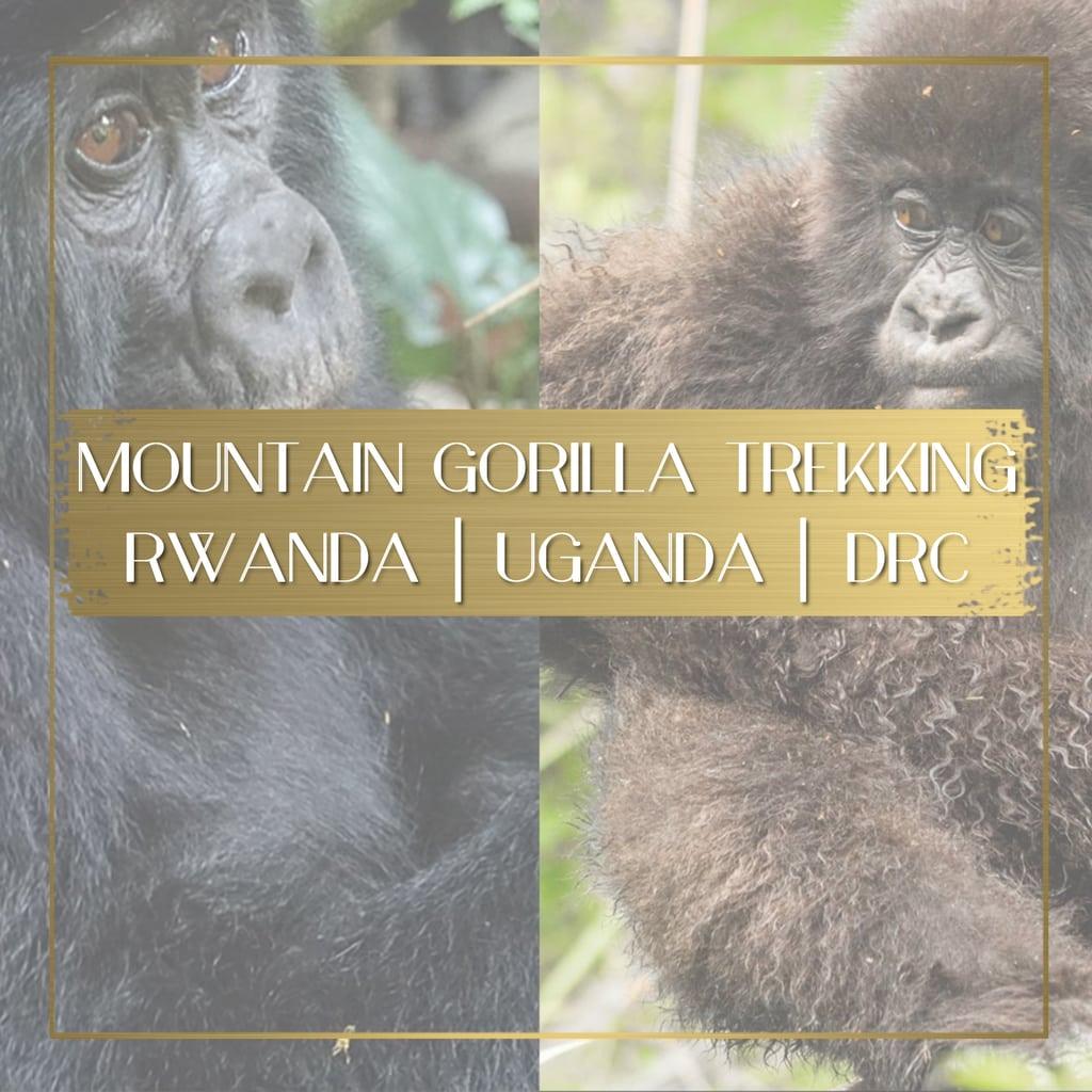 Mountain gorilla trekking feature
