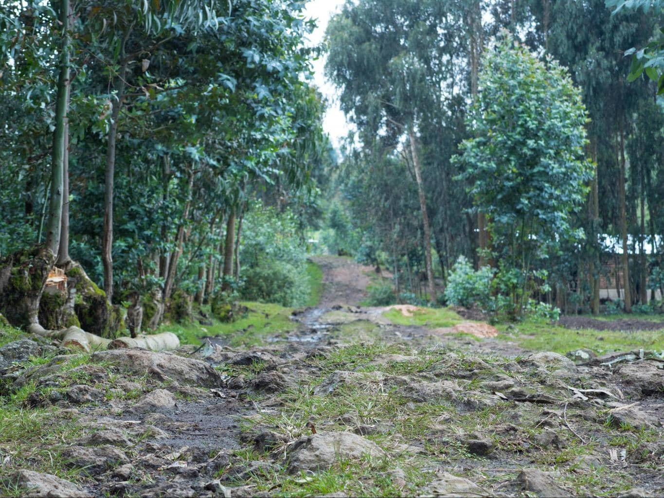 The path to Bisate Lodge