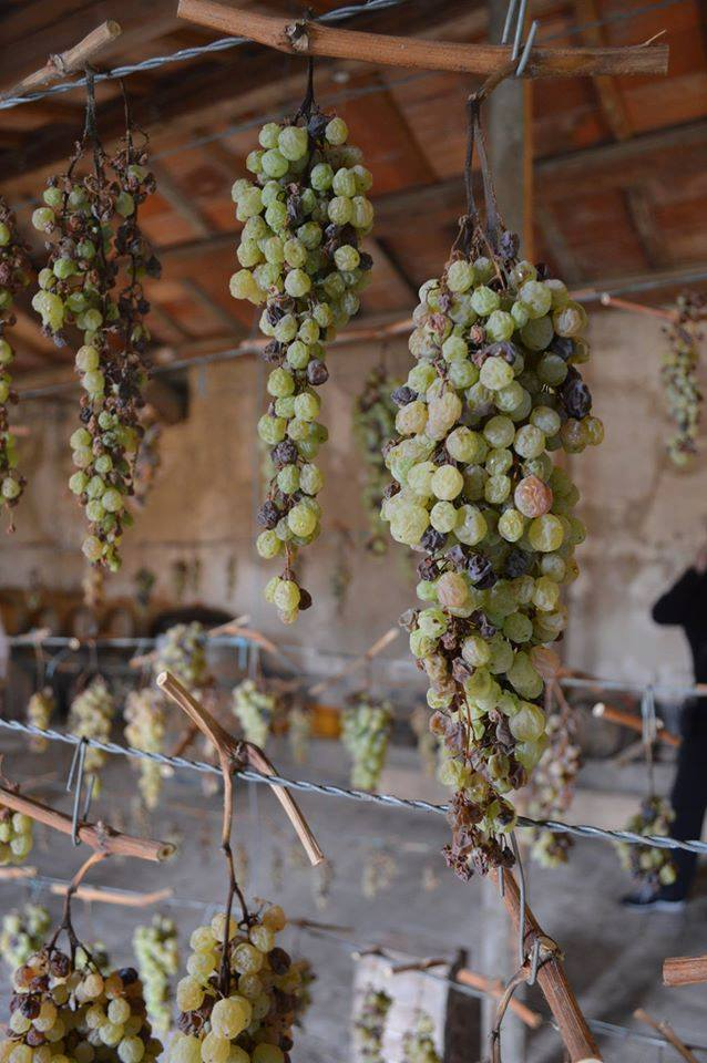 Grapes drying for Vin Santo by Km Zero Tours - Slow Travel in Tuscany