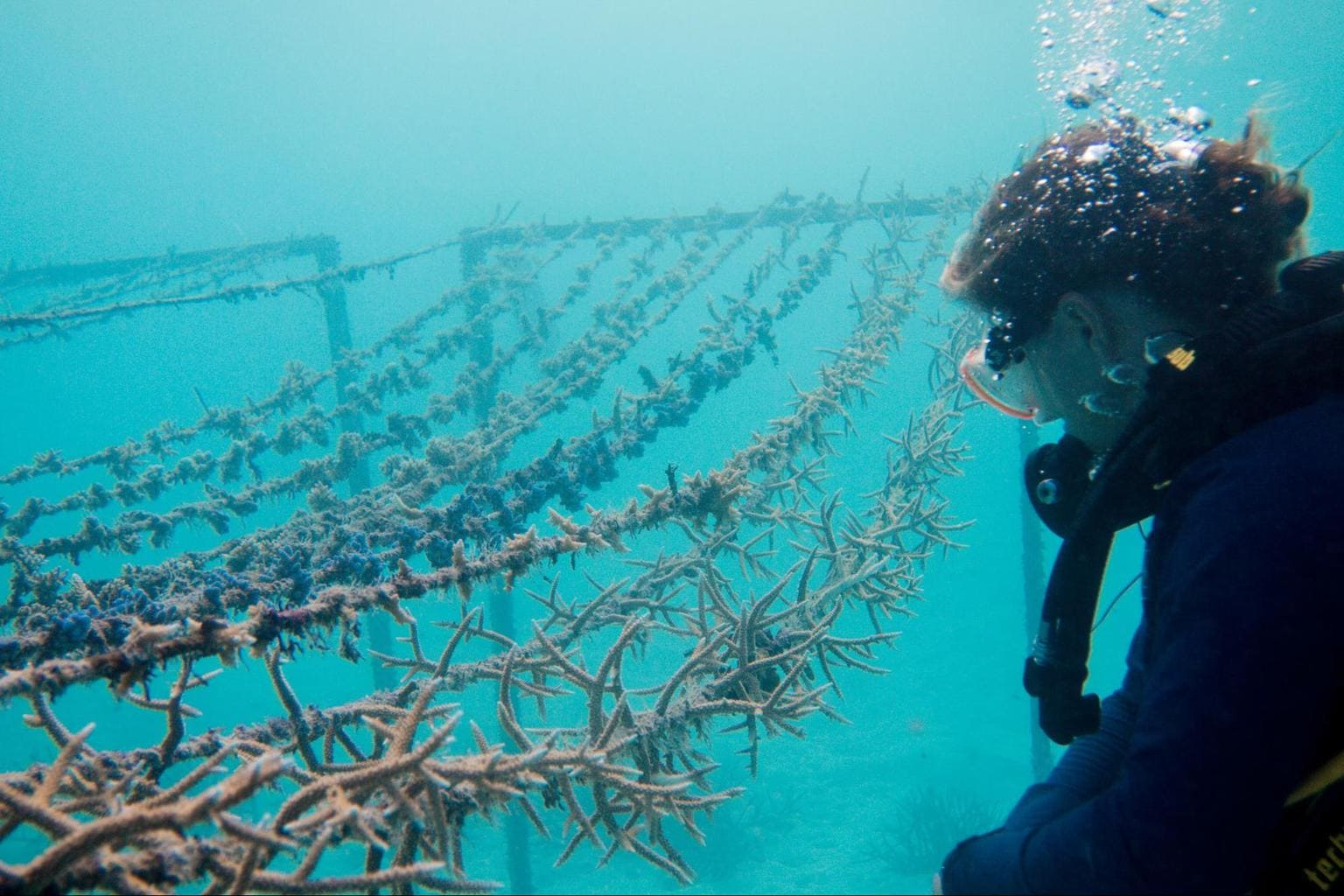 Coral lines at Gili Lankanfushi - Courtesy of Gili Lankanfushi