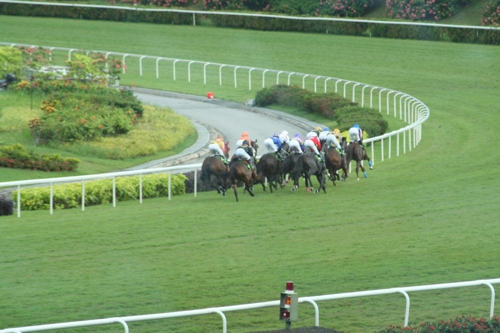Horse race at Kranji Racecourse