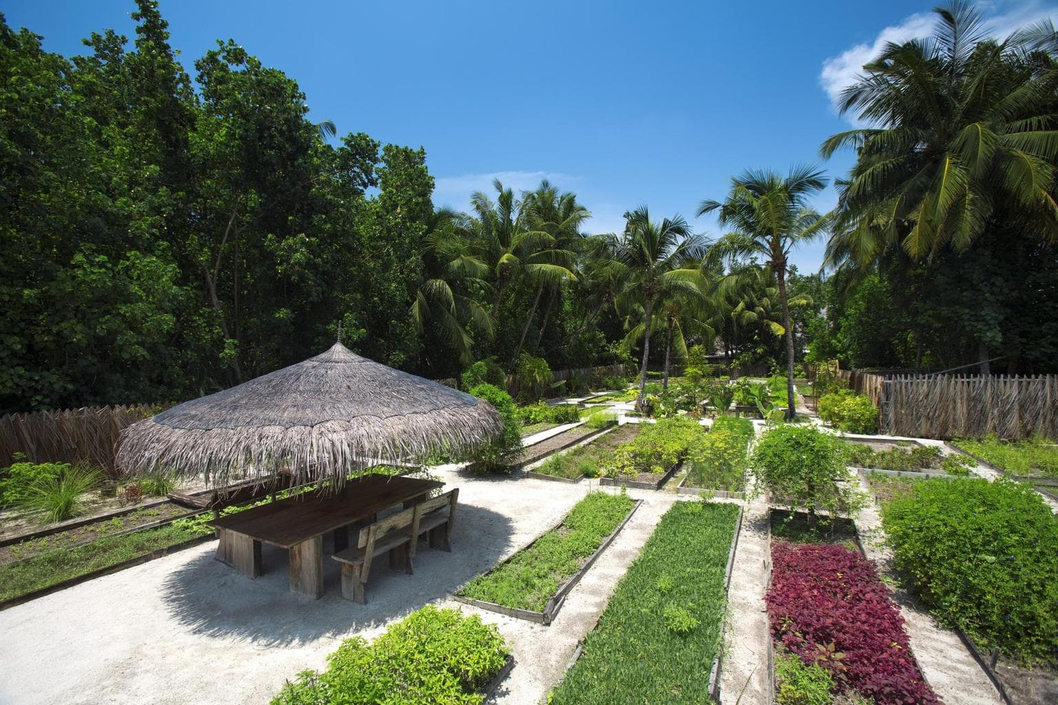 Organic garden at Gili Lankanfushi - Courtesy of Gili Lankanfushi