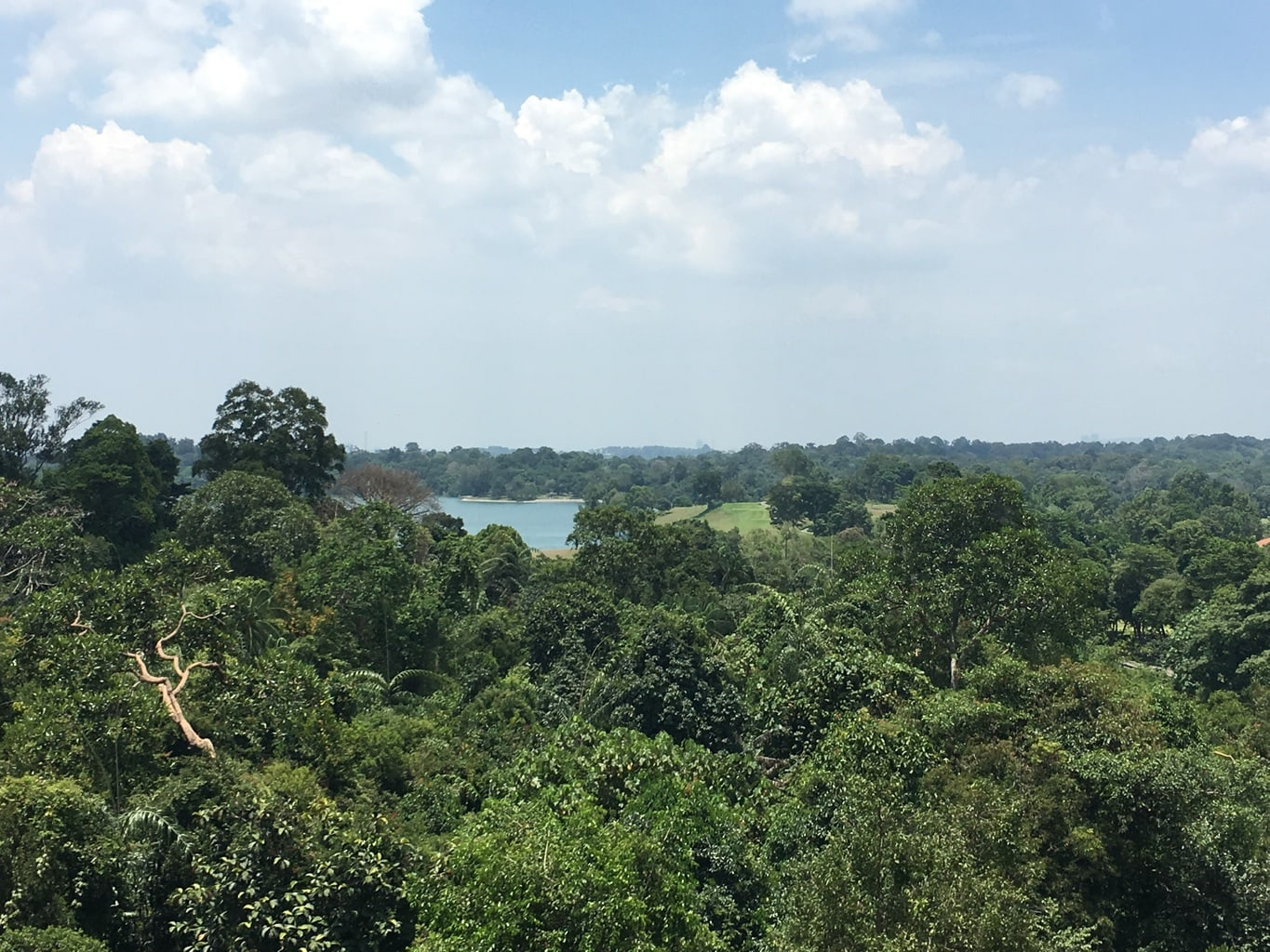 View from MacRitchie suspended bridge
