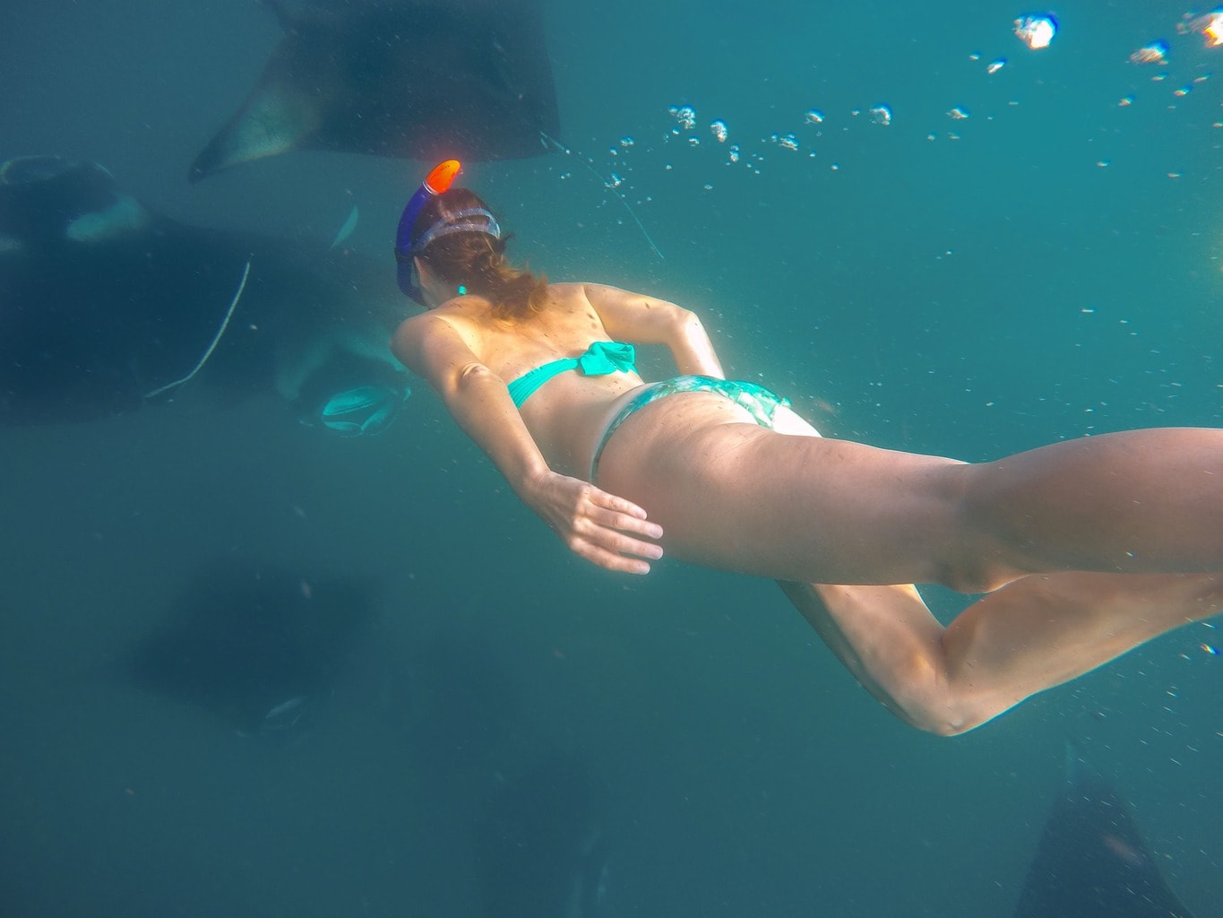 Snorkeling with the mantas