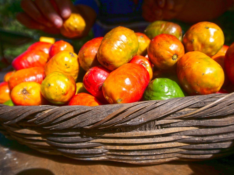 Fruits in El Salvador