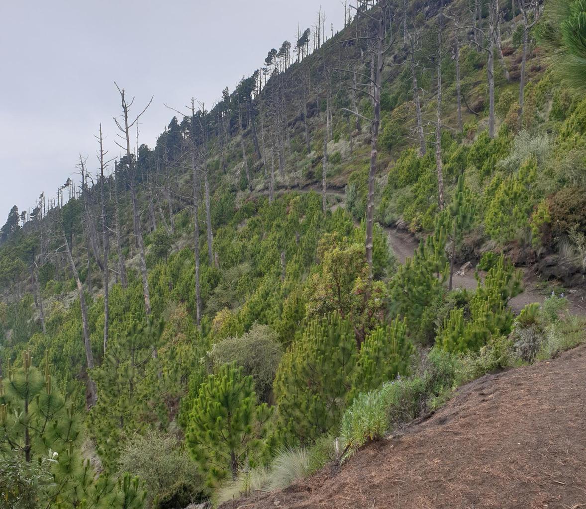 Hiking trail through Acatenango Volcano