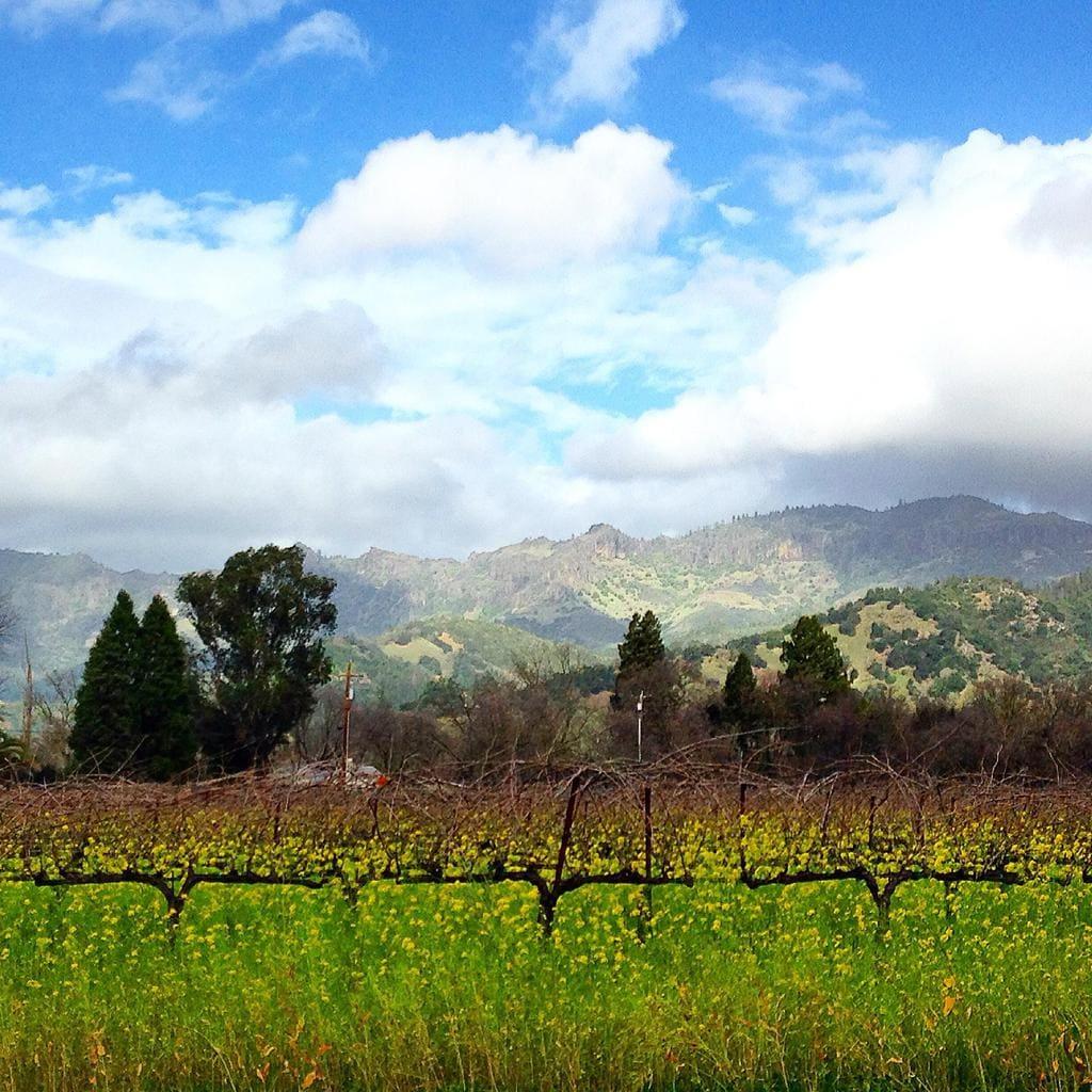 Napa Valley scenery