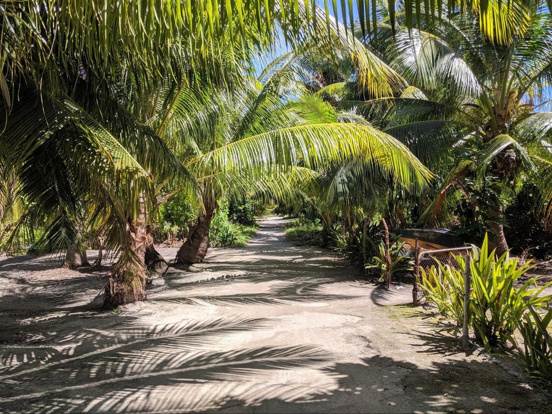 The paths along North Tarawa