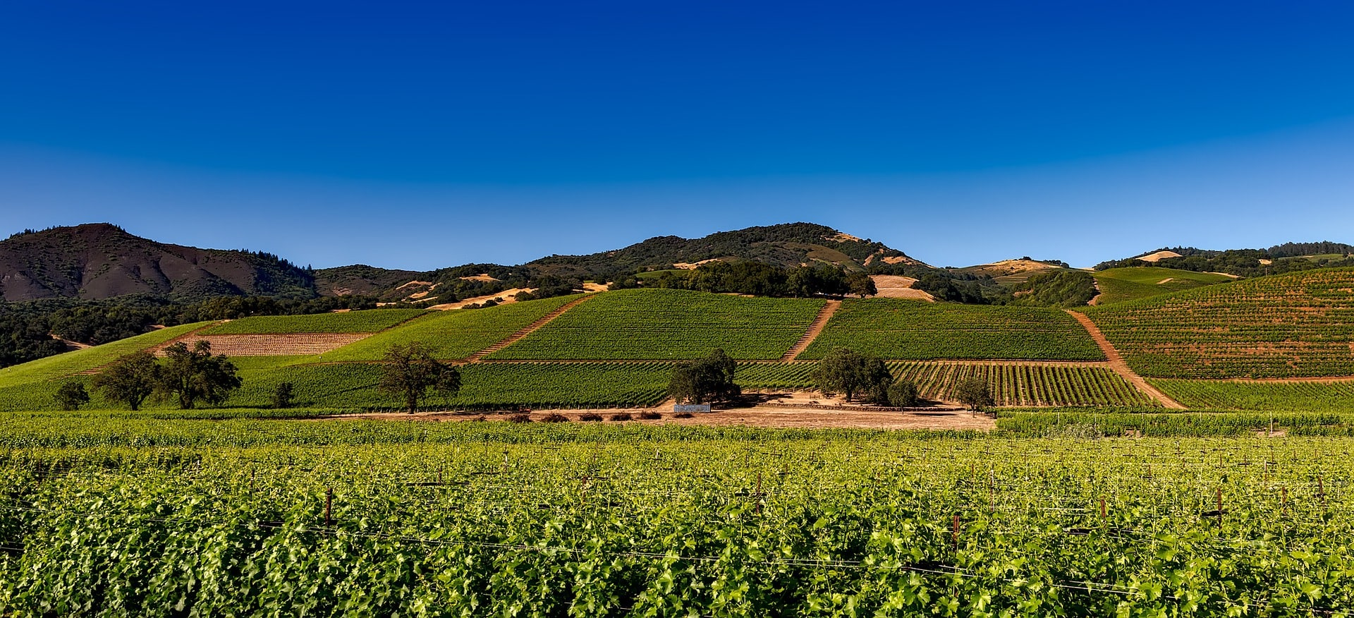 Things to do in Napa Valley - go wine tasting