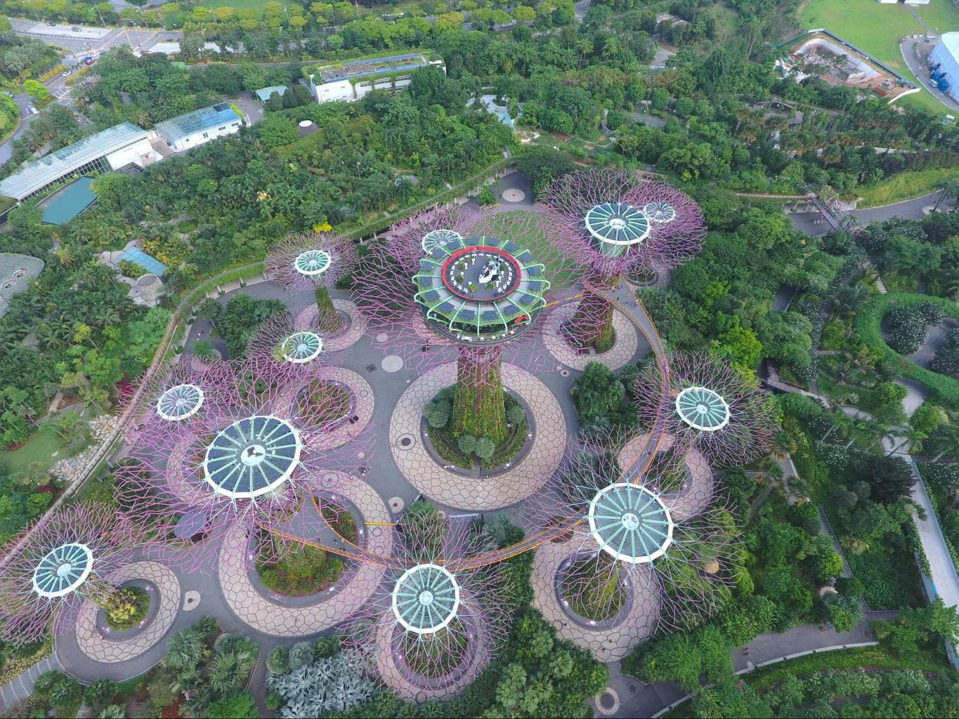 Drone shot of the Supertree Grove