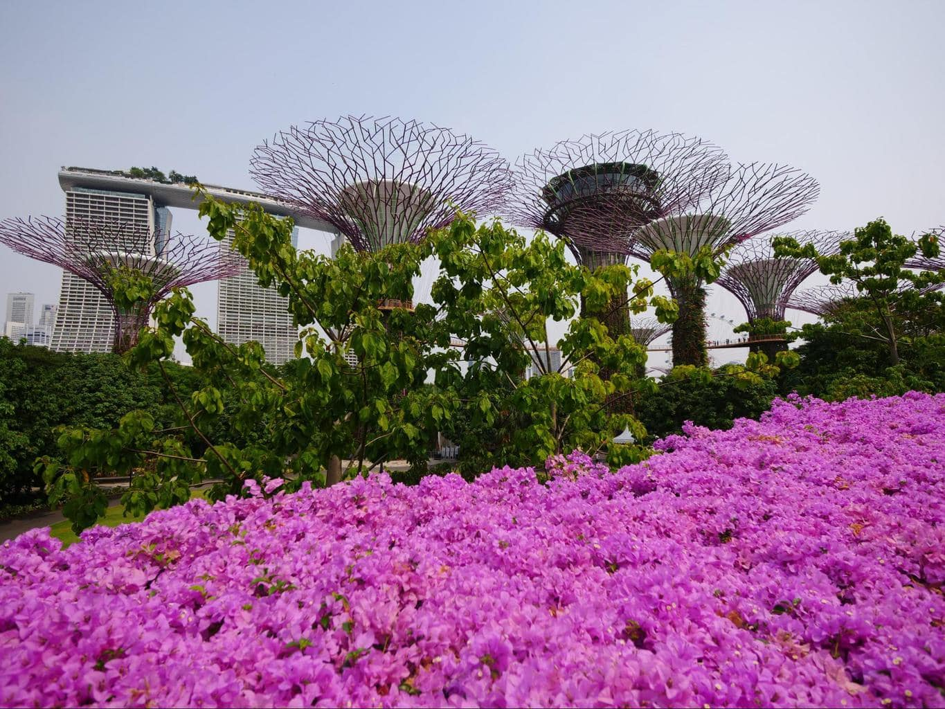 Gardens by the Bay in bloom