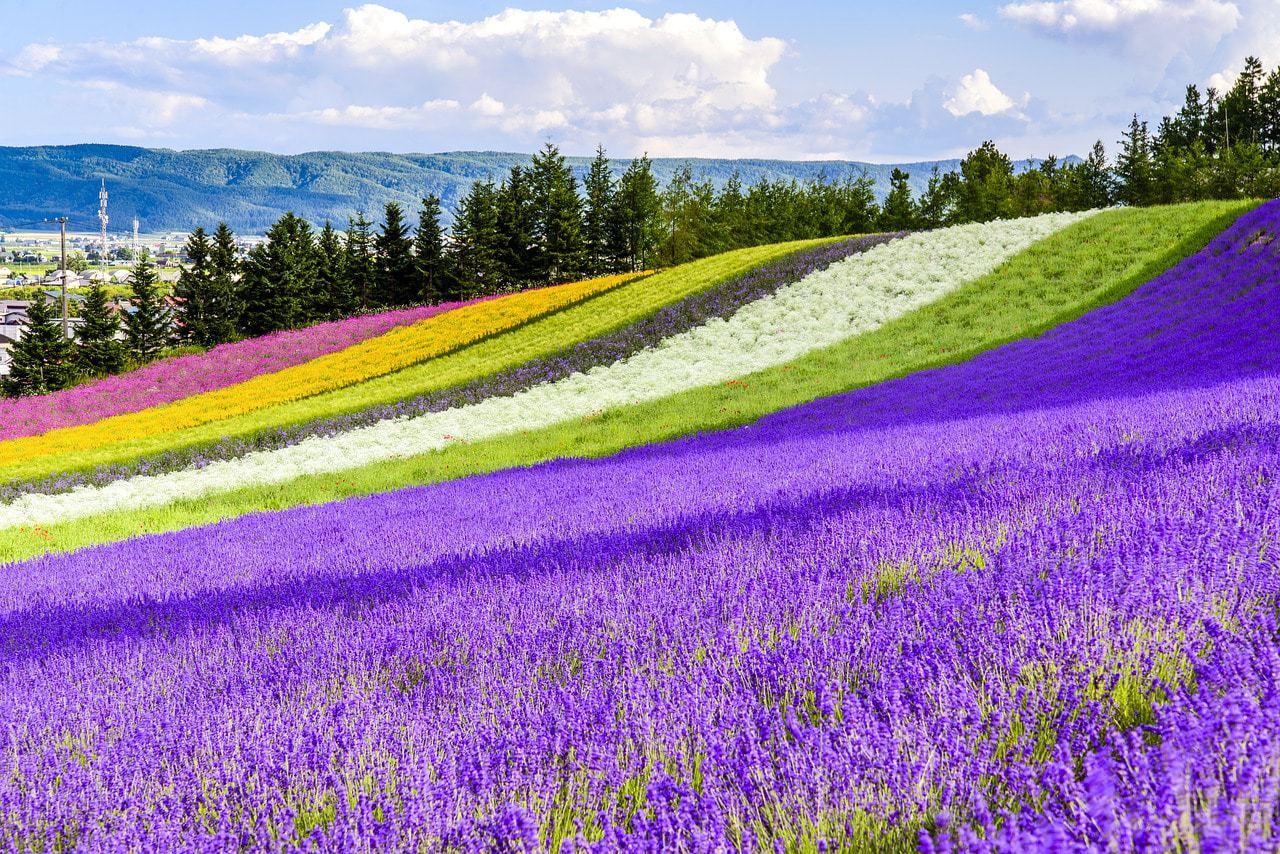 Japan's flower fields