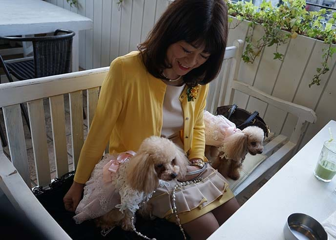 The cutest animals at Tokyo's pet cafes 02
