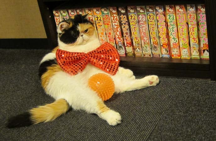 The cutest animals at Tokyo's pet cafes