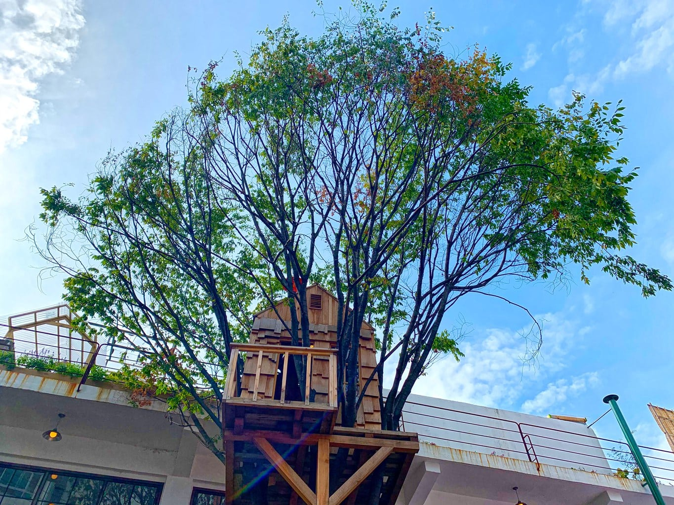 Treehouse at Grandpa Factory