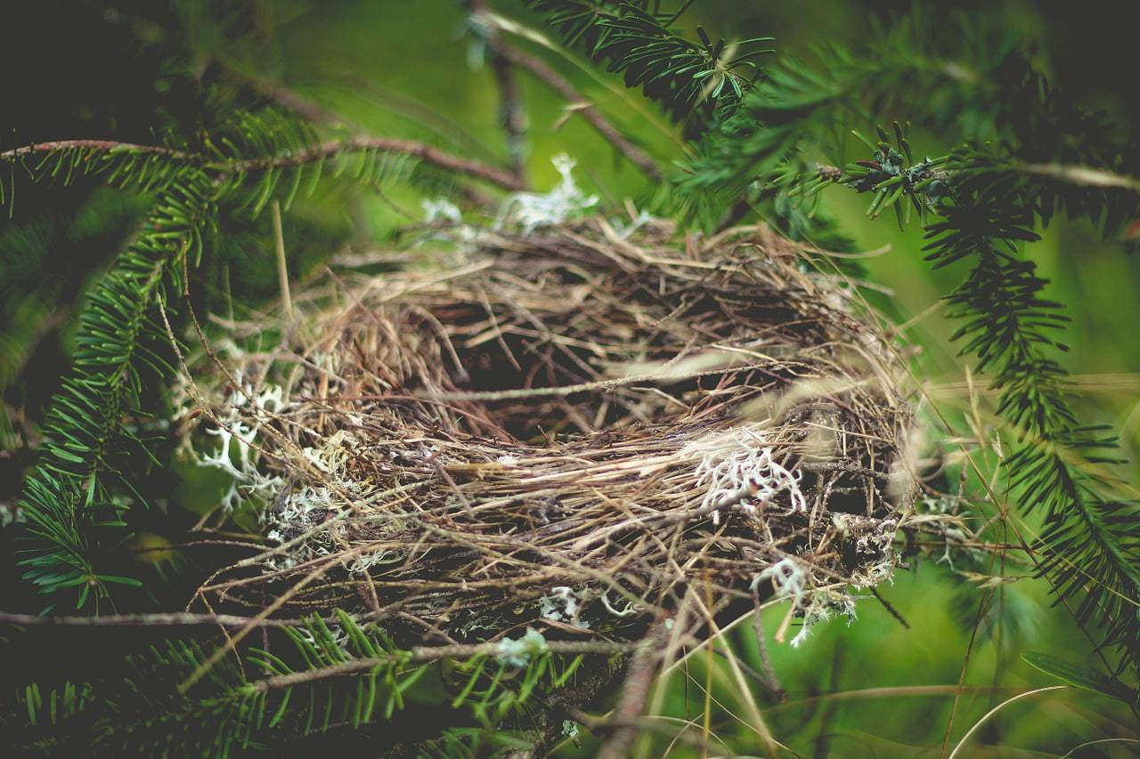 Bird's nest, a place for foraging in China