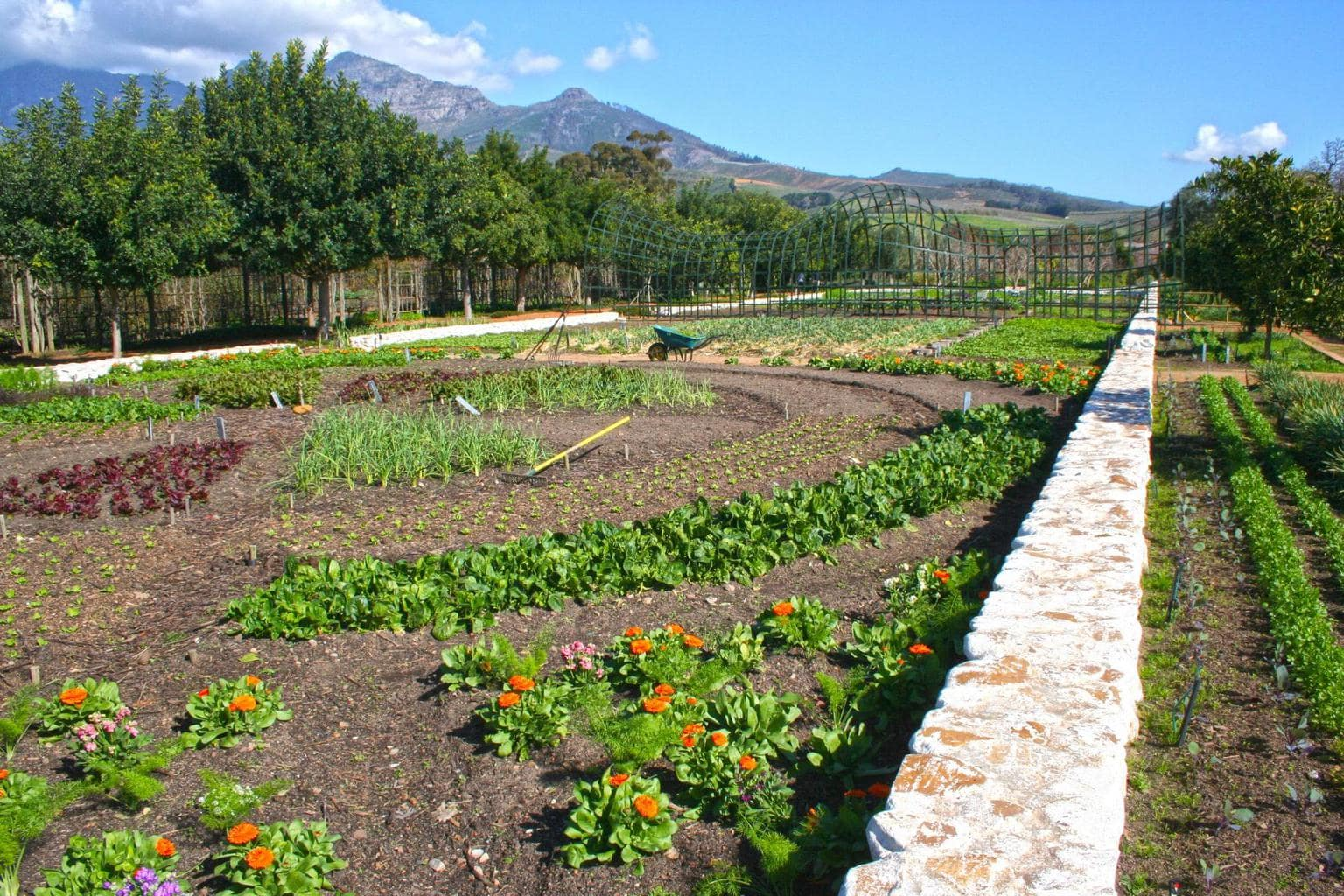 The gardens at Babylonstoren