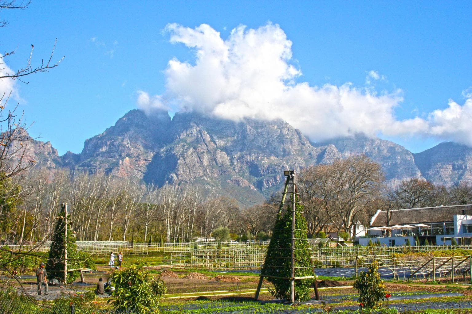 The grounds at Boschendal