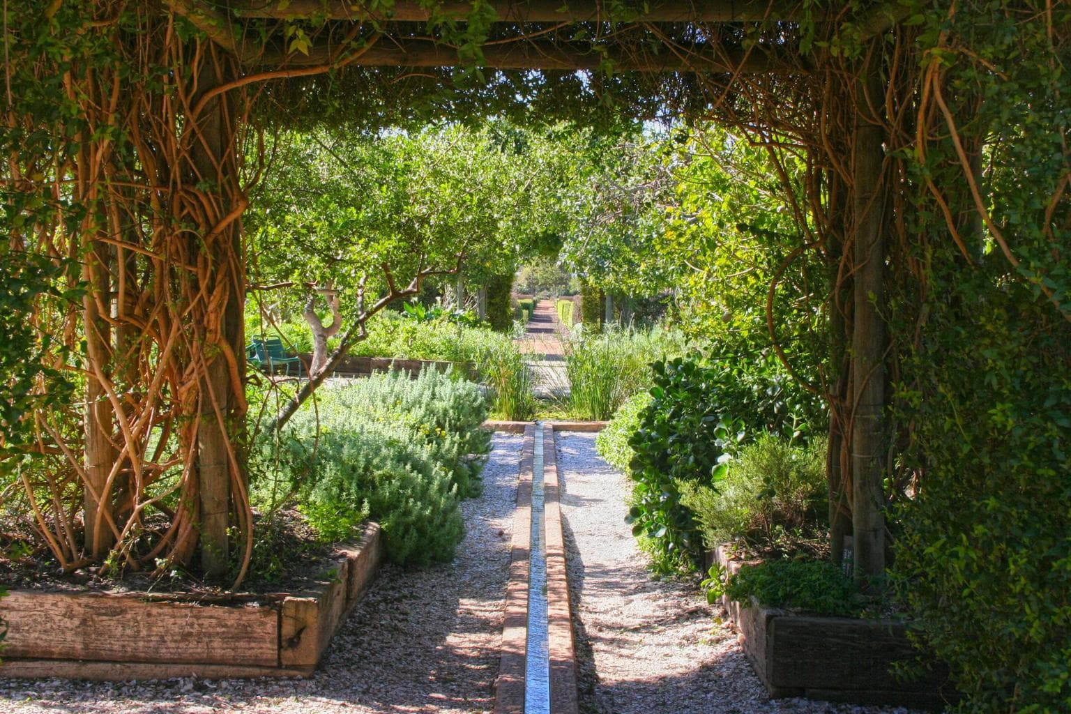 The walkways at Babylonstoren