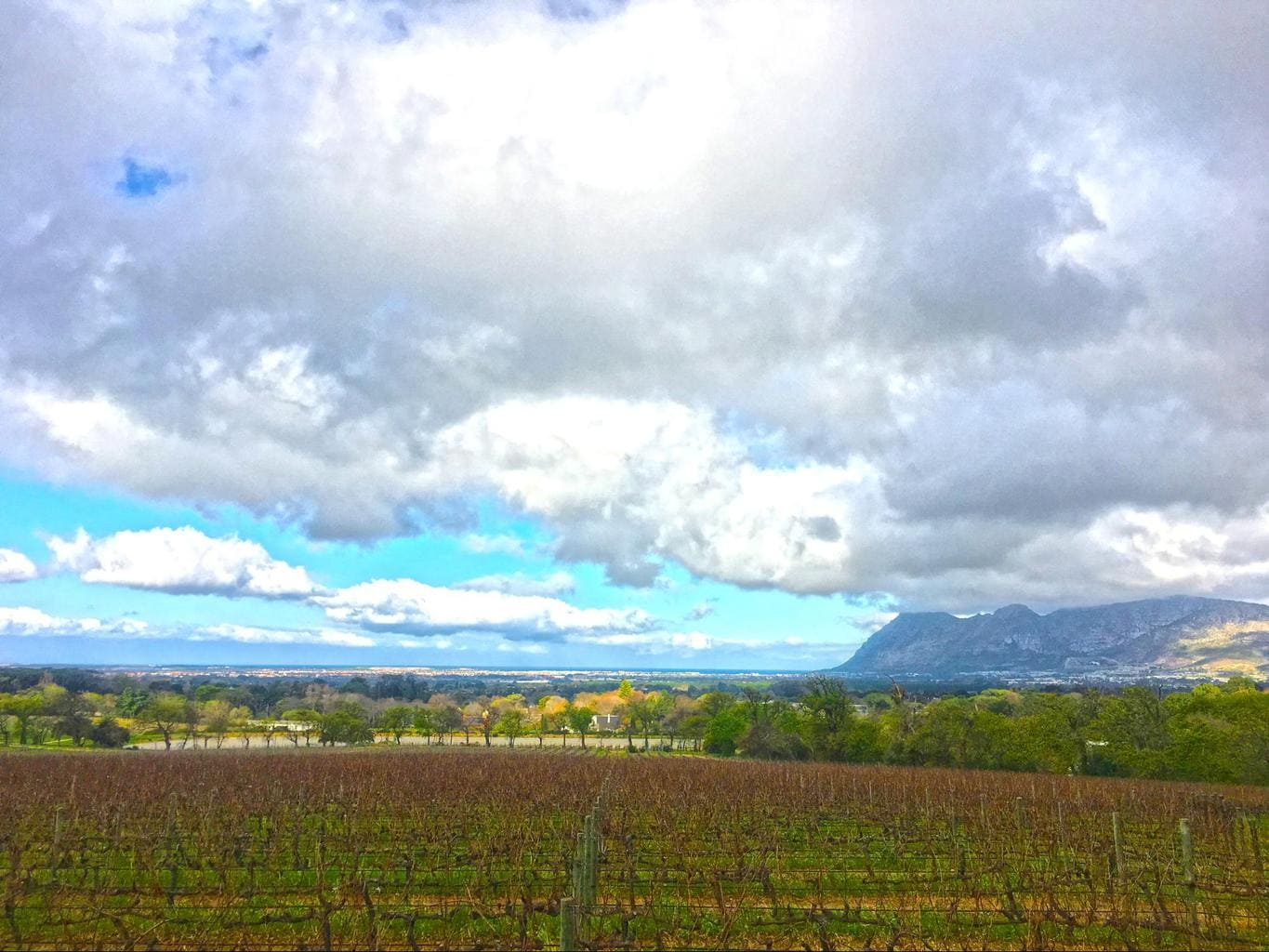 Views at Groot Constantia
