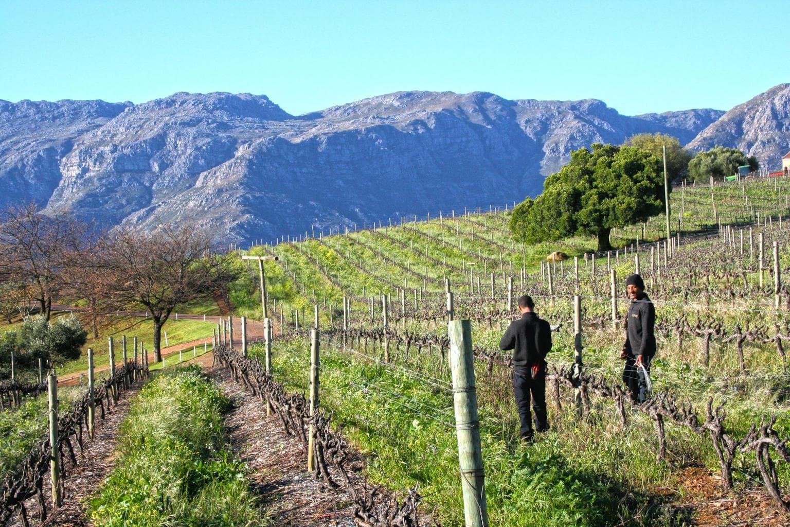 Workers at one of the wineries near Cape Town