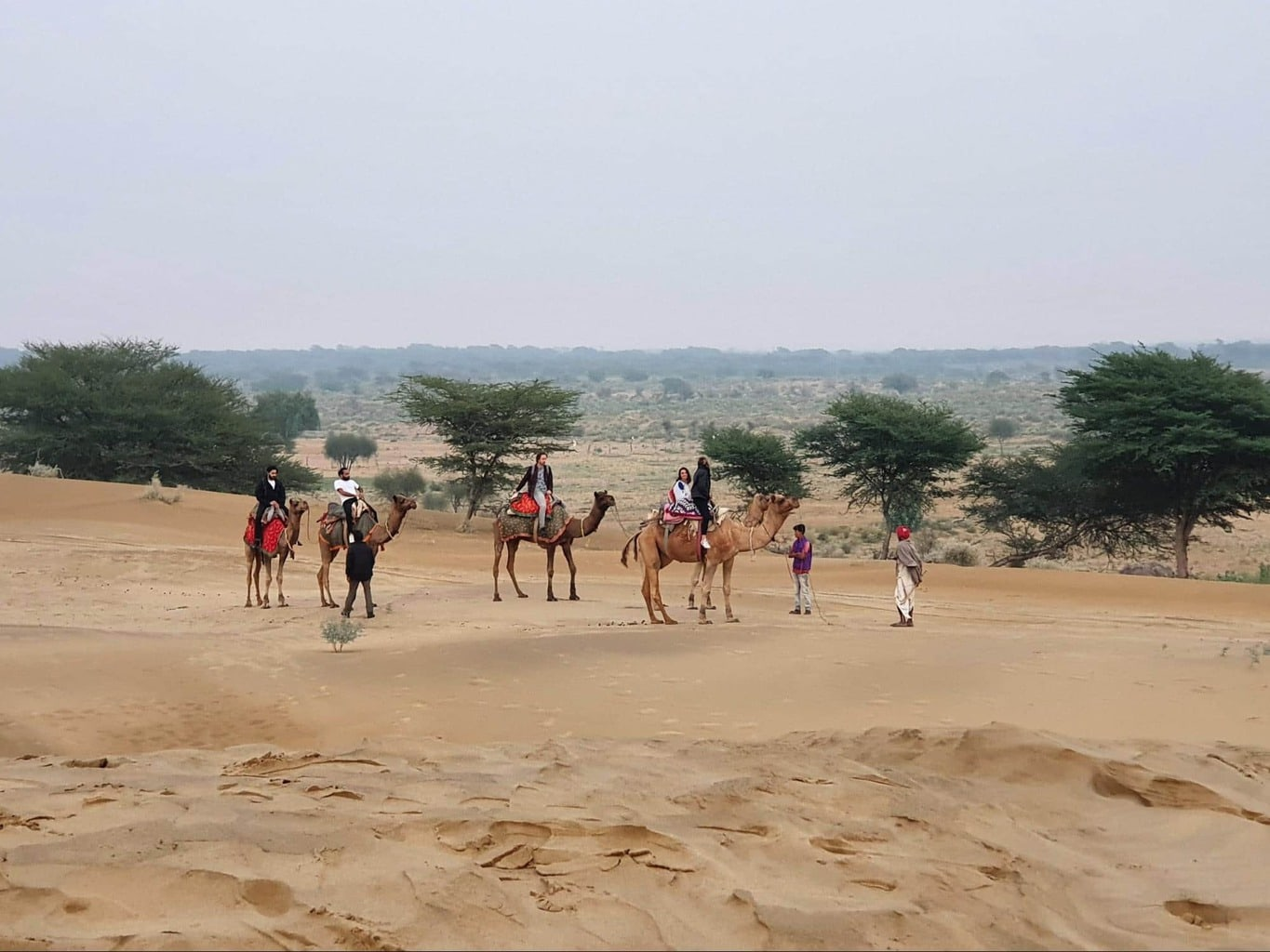 Desert safari, but don't ride the camels