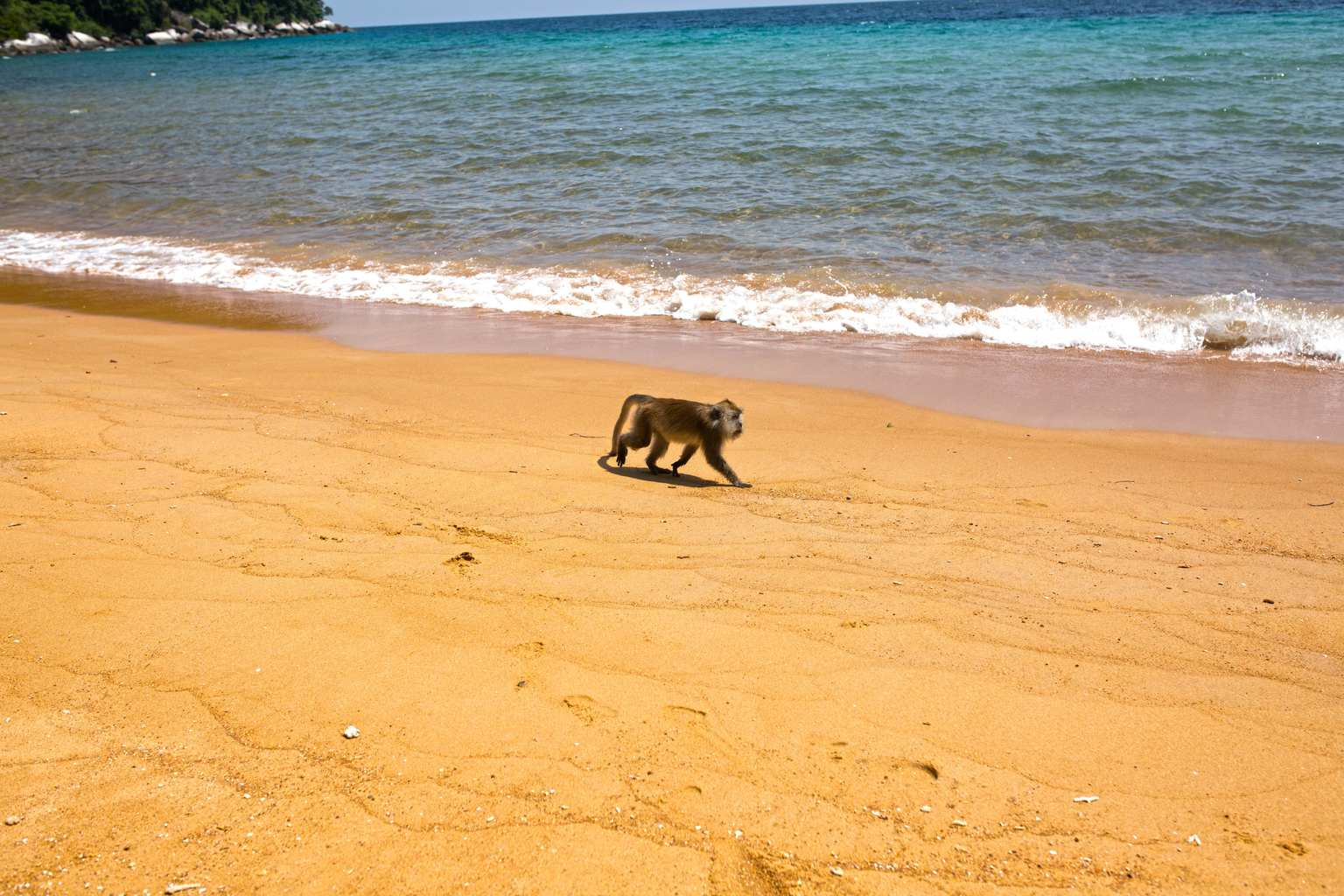 Monkey at Money Beach