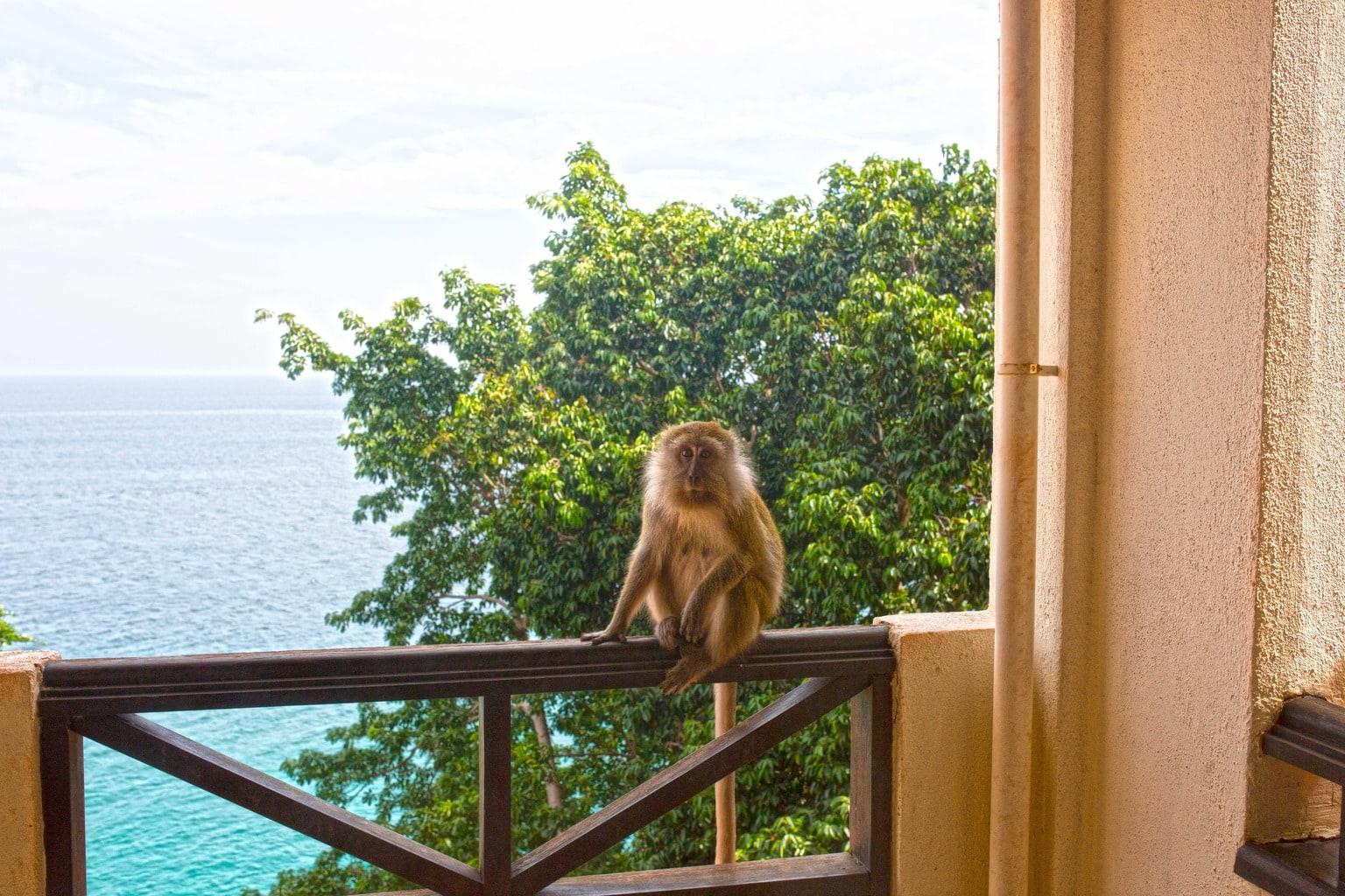Monkey on the balcony