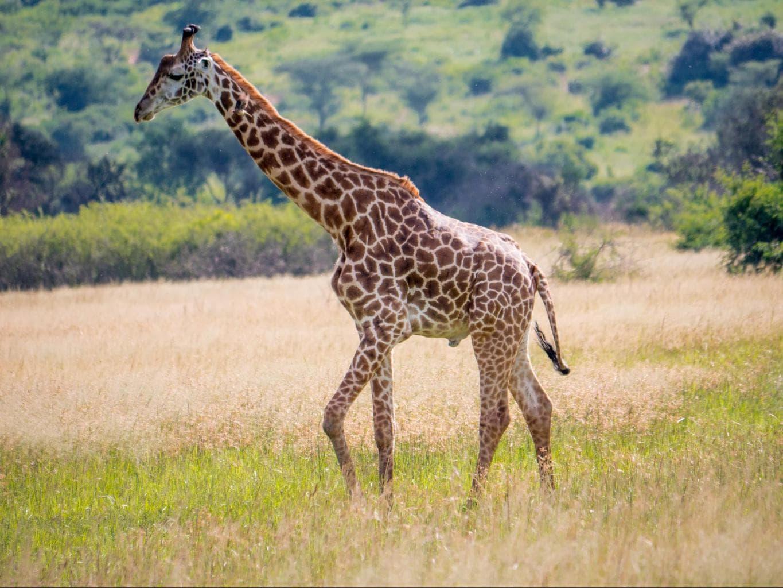 Wildlife at Akagera National Park