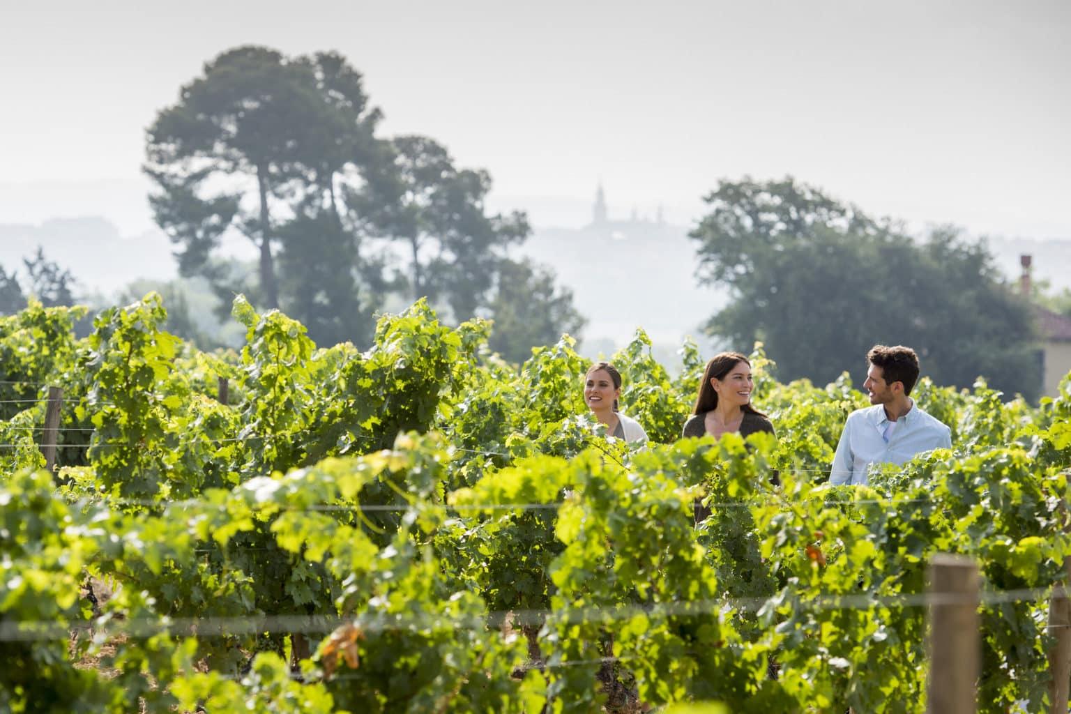 Mas La Plana vineyards Familia Torres winery