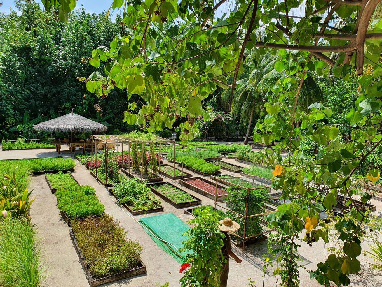 Gili Lankanfushi garden
