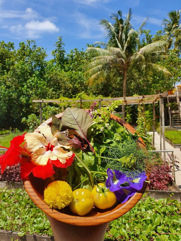 Gili Lankanfushi garden greens