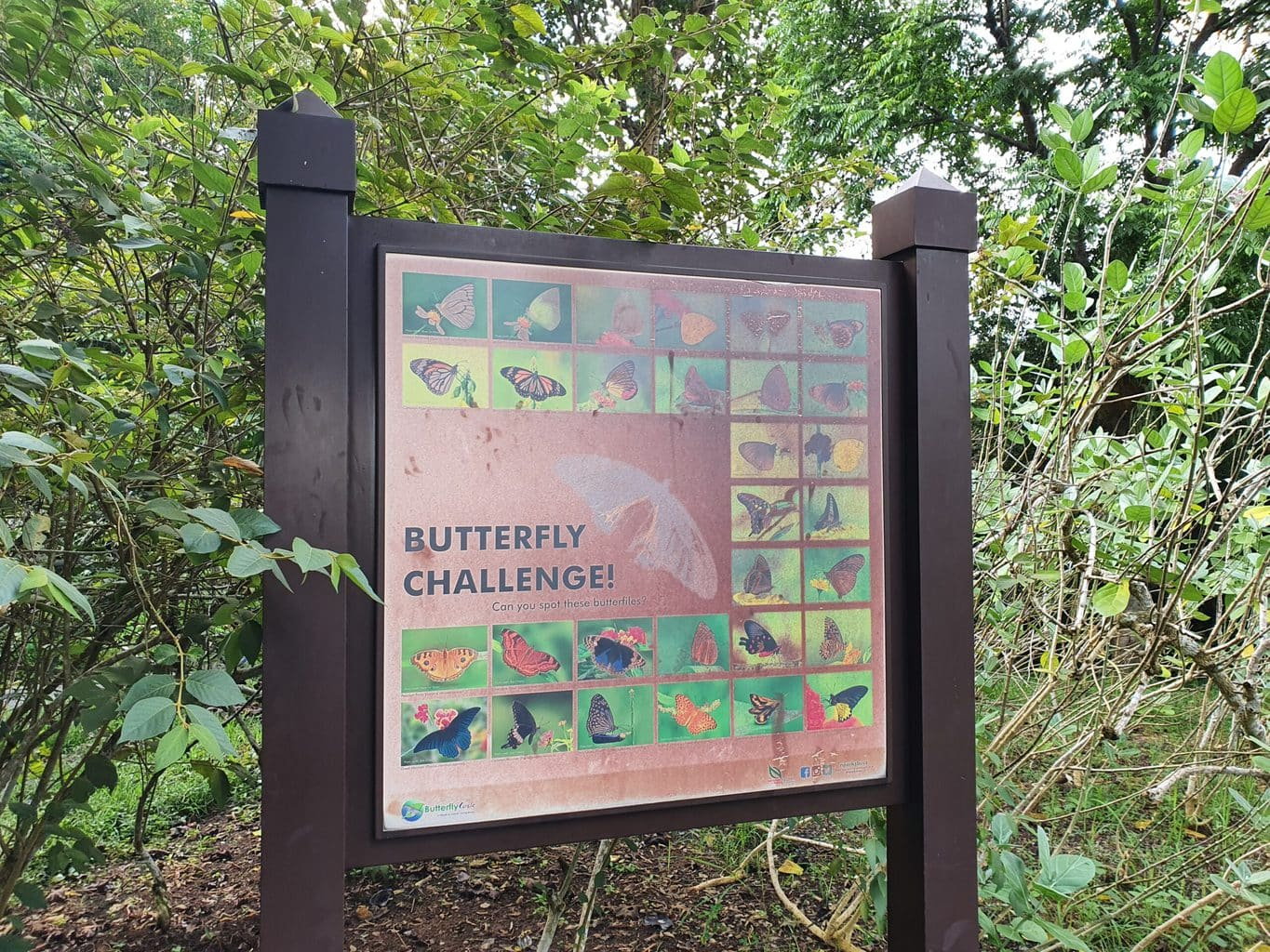 Butterfly hill in Pulau Ubin