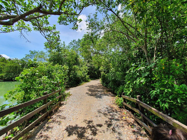 Trails on Pulau Ubin