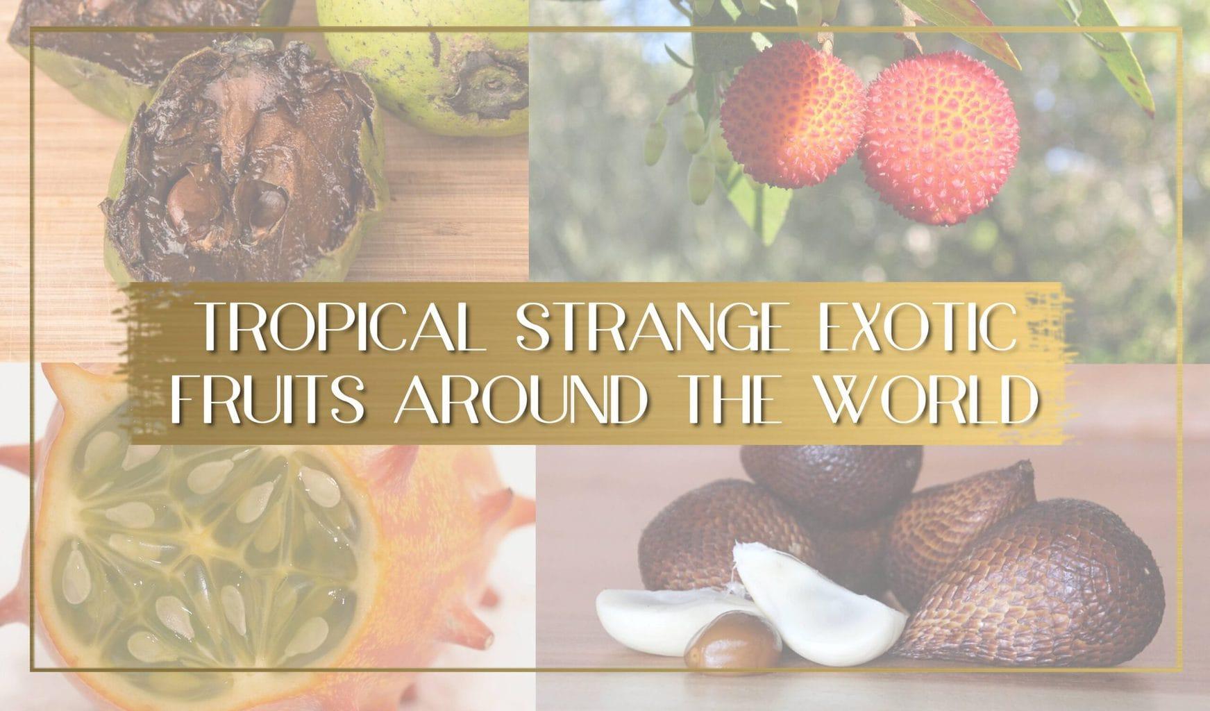 Exotic fruits main