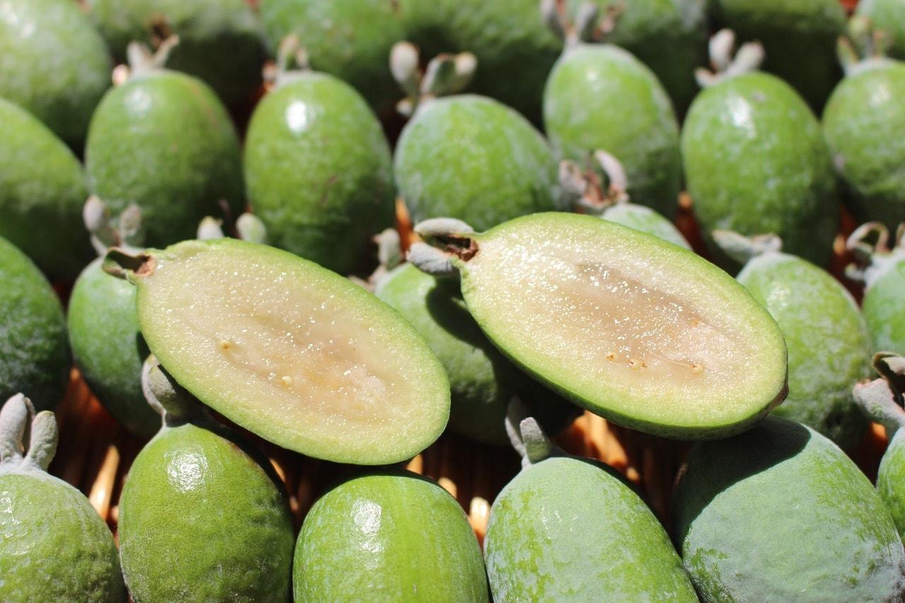 Feijoa (Pineapple Guava)