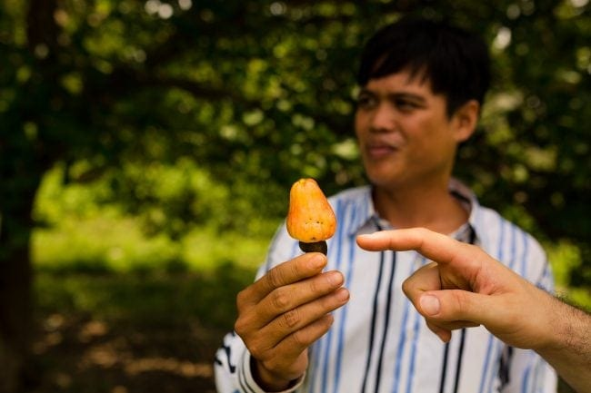 Our tour guide showing us a cashew fruit near the Katcha tribe along the Tonle River in Ratanakiri.