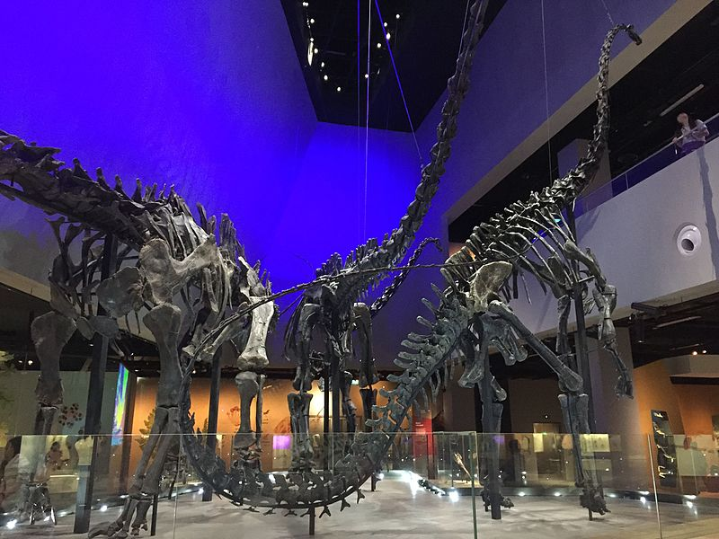 Lee Kong Chian Natural History Museum Exhibition